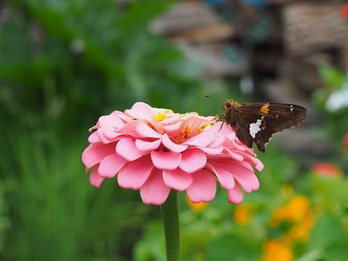 天性, 粉紅色的花, 美麗的花朵, 花 的 免费素材照片