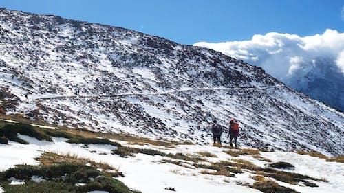 Gratis lagerfoto af bjerg, pnw, sne