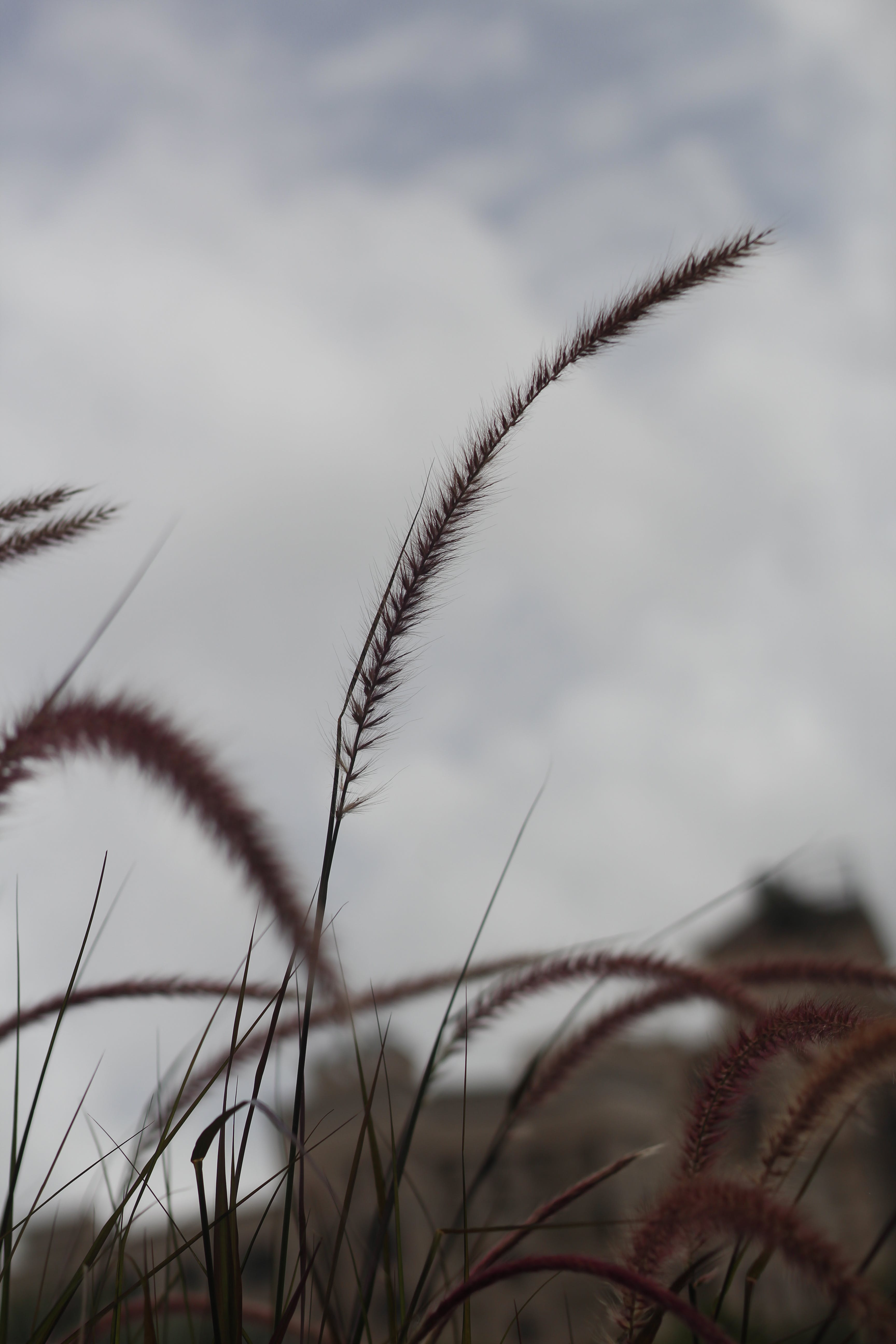 Selective Focus Photo of Wheat