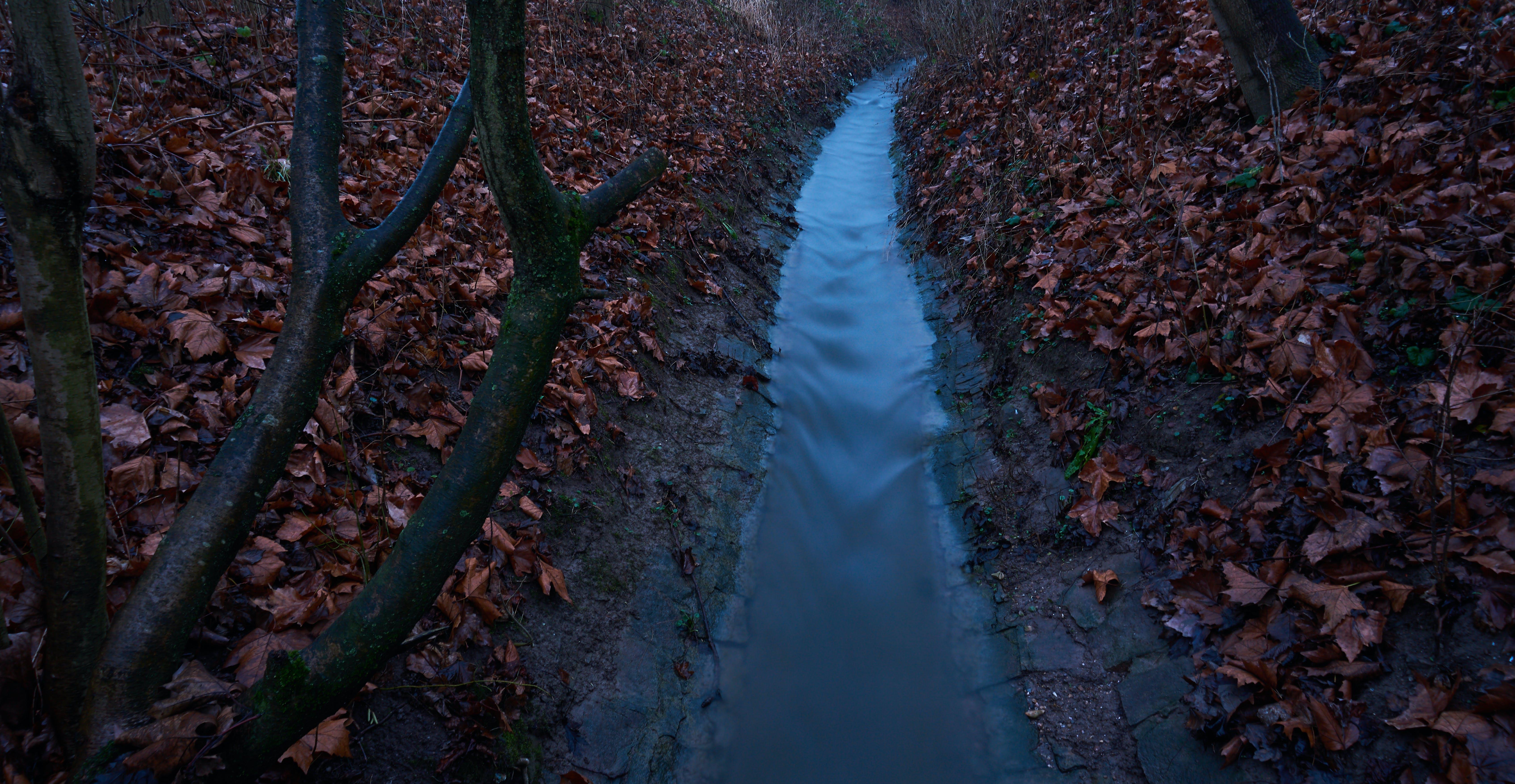 Foto d'estoc gratuïta de arbre, boscós, branca, coberta forestal