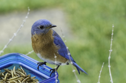 Selective Focus Photography of Blue and Brown Bird on Blue Glass Canister