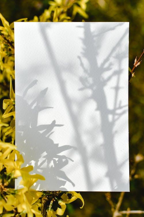 Yellow Flowers Beside White Window Curtain