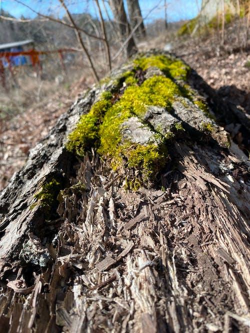 Foto profissional grátis de árvore, casca de árvore, floresta