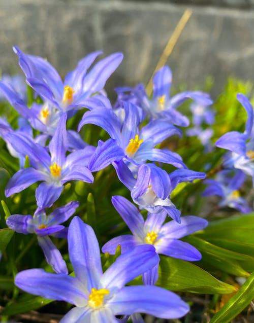 Foto profissional grátis de flor silvestre, mãe natureza, natureza florestal