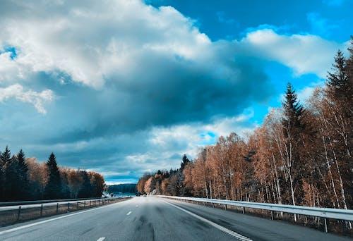 Foto profissional grátis de árvores, céu azul, céu de brigadeiro