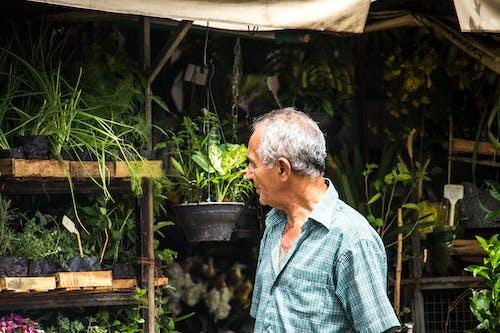 Ilmainen kuvapankkikuva tunnisteilla aikuinen, kasvikunta, kasvit, kattila