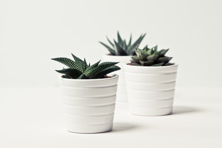 Selective Focus Photography of Three Succulent Plants