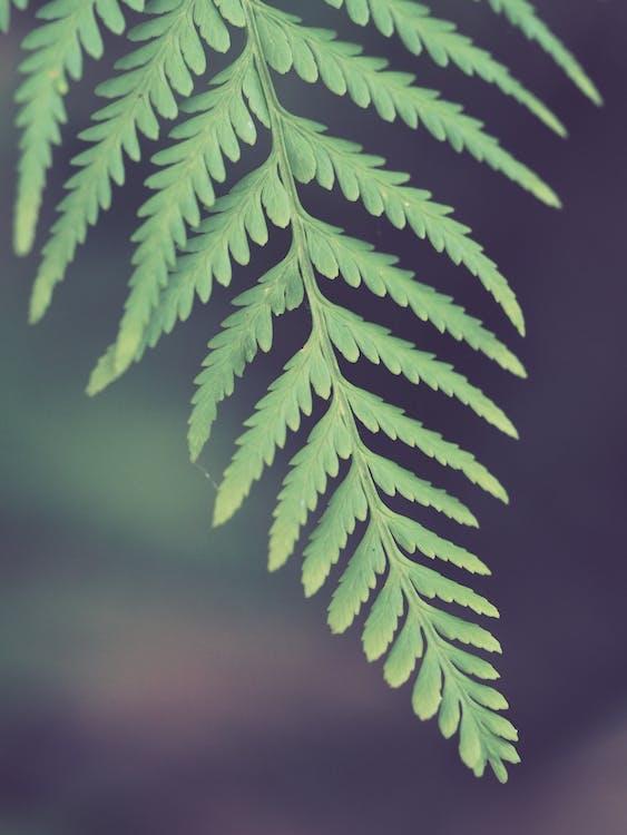 árbol, biología, brillante