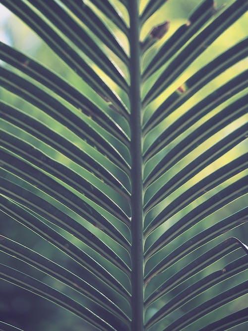 Gratis lagerfoto af biologi, bregne, bregneblad, close-up