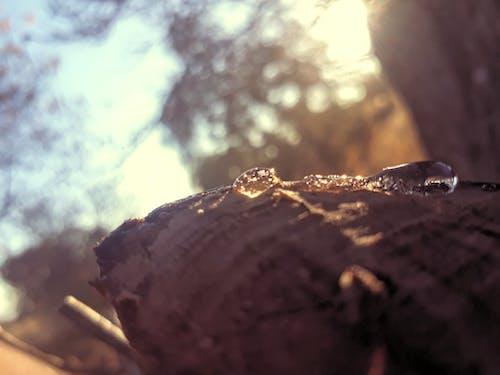 Fotos de stock gratuitas de gota de rocío