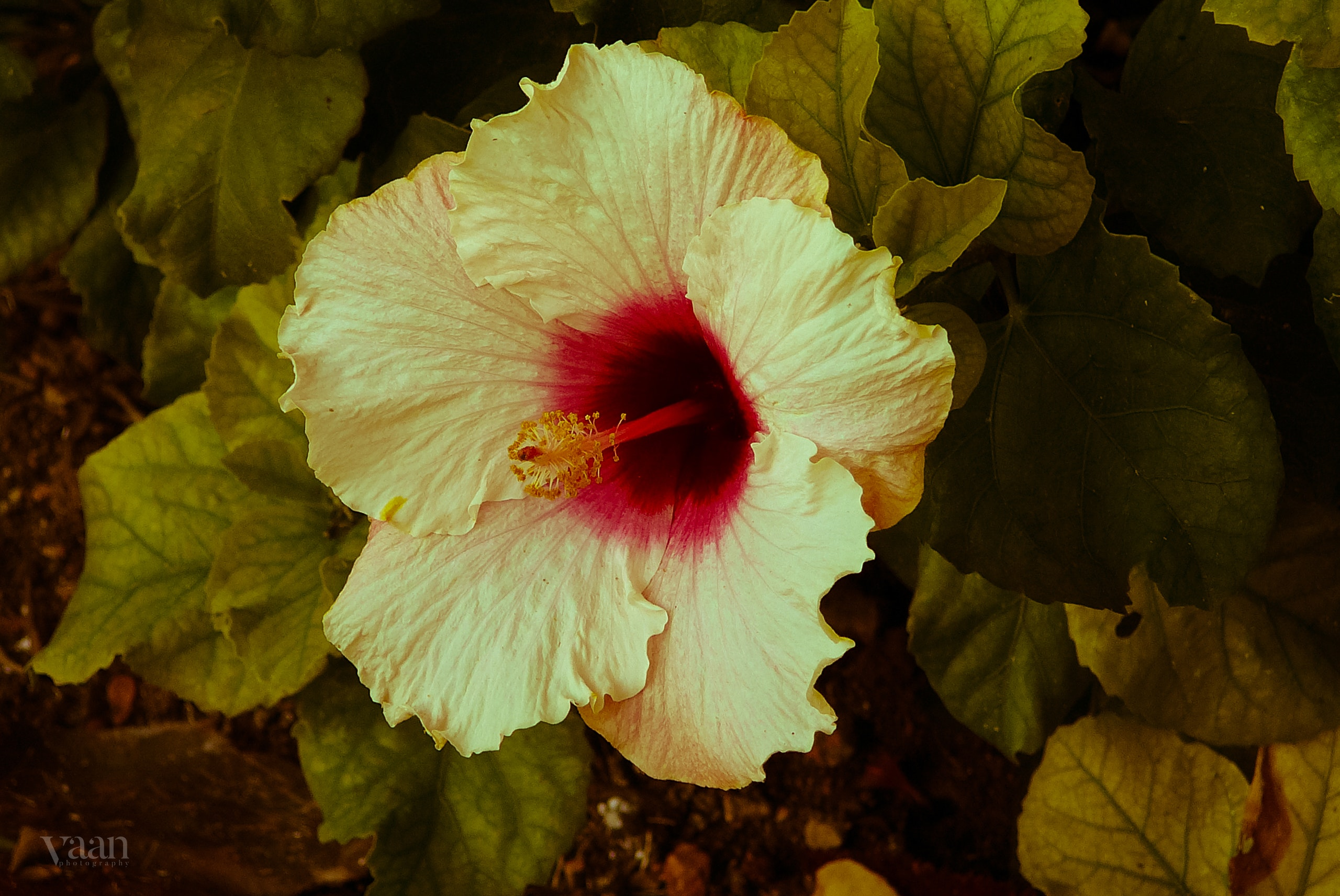 Outstanding how do you say beautiful flower in hawaiian adornment colorful how do you say beautiful flower in hawaiian pattern izmirmasajfo