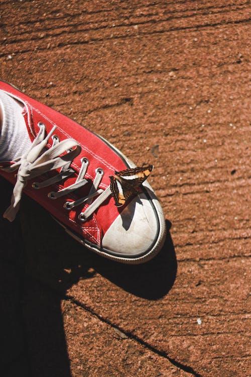 Fotos de stock gratuitas de calzado, cordones, de cerca
