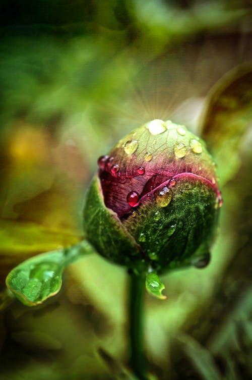 Kostenloses Stock Foto zu blühende pflanze, blüte, blüten flora
