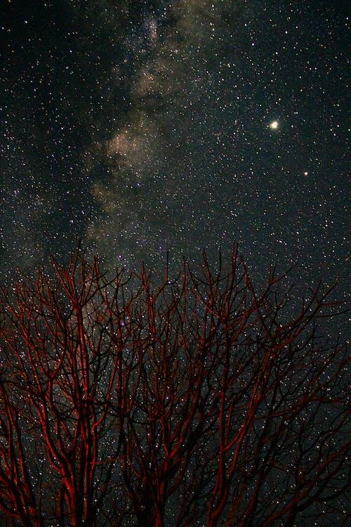Brown Bare Tree Under Starry Night