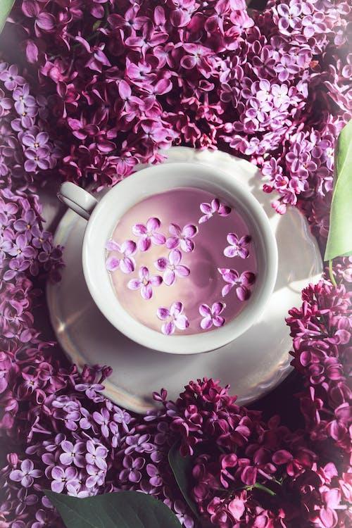 Δωρεάν στοκ φωτογραφιών με άνοιξη, ανοιξιάτικο λουλούδι, απογευματινό τσάι