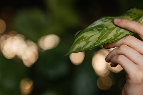 Person Touching A Green Leaf