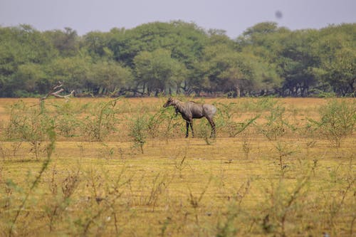 Free stock photo of animal, animal farming, animal image