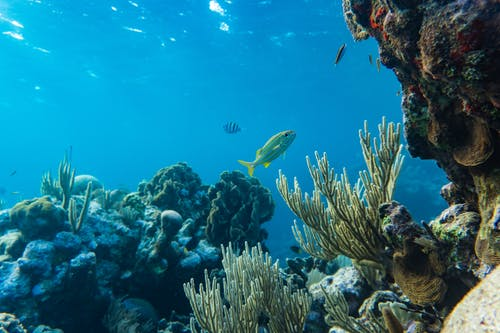 Photo of a Yellow and Silver Fish Swimming Near Coral Reefs