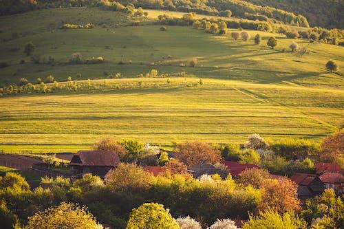 คลังภาพถ่ายฟรี ของ การเกษตร, ชนบท, นา