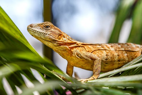Lizard on Green Plant