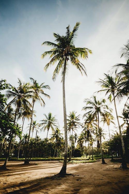Ingyenes stockfotó egzotikus, fa, homok témában