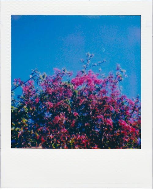 Free stock photo of abstract, art, beautiful
