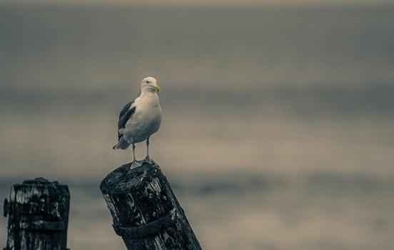 Close-Up Photography of Seagull