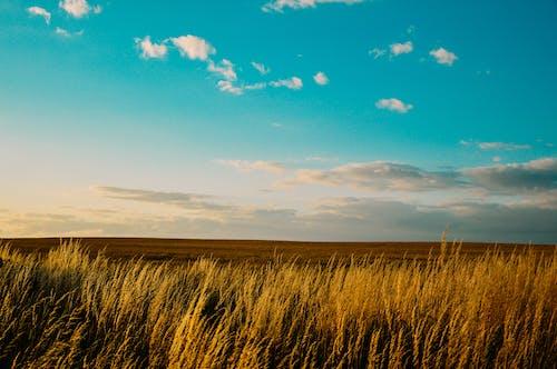 Základová fotografie zdarma na téma HD tapeta, hřiště, obloha, příroda