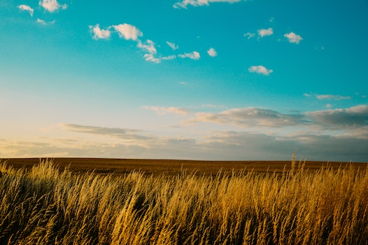 Free stock photo of nature, sky, field, countryside
