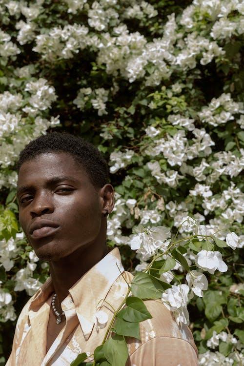 Foto stok gratis bunga putih, gagah, ganteng