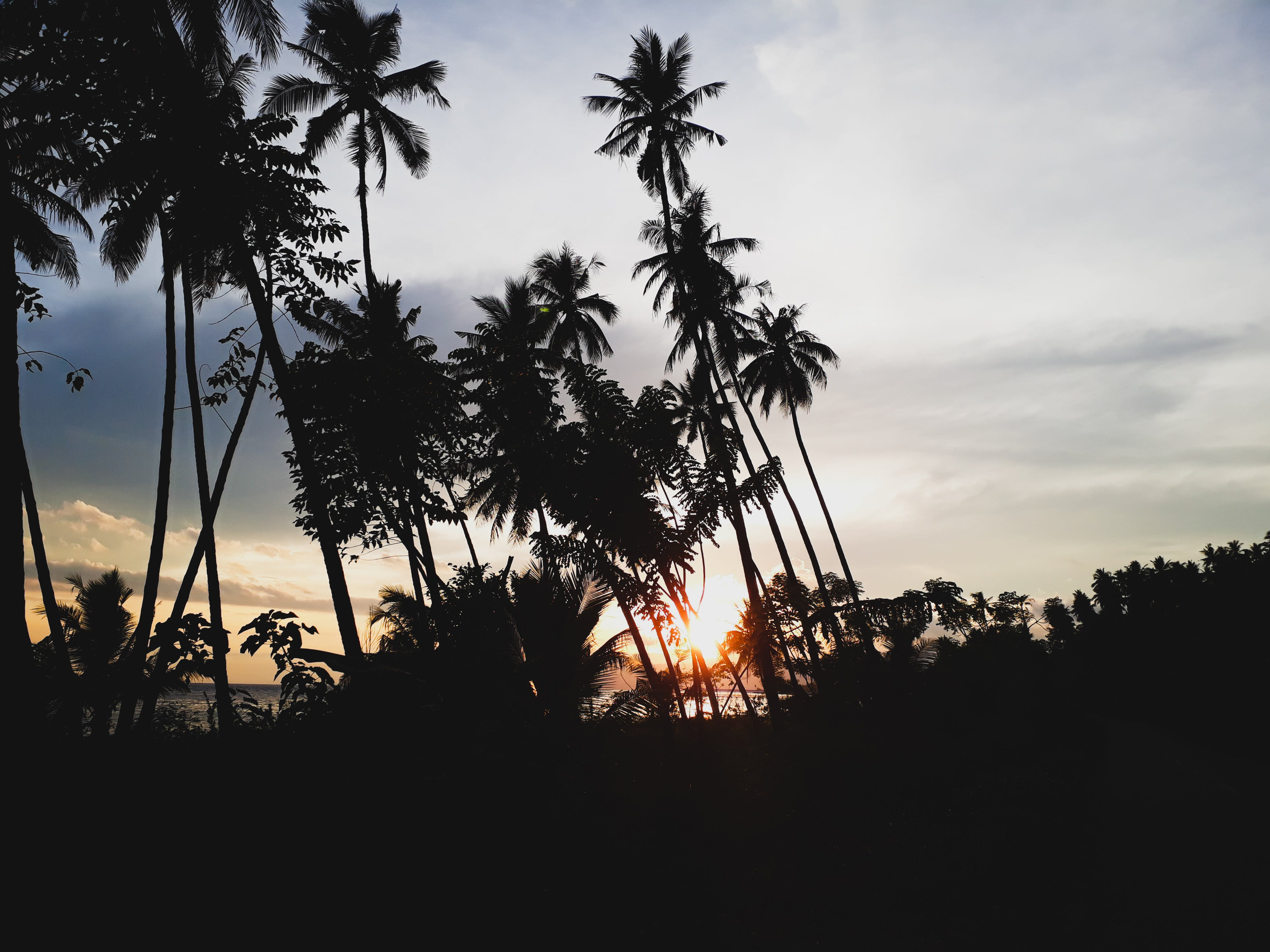 Silhouettes of Palm Trees During Sunset