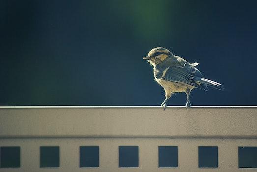 Free stock photo of nature, bird, animal, sparrow