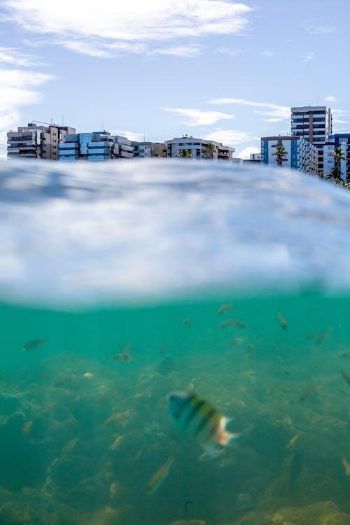 Immagine gratuita di acqua, acqua dell'oceano, acqua di mare