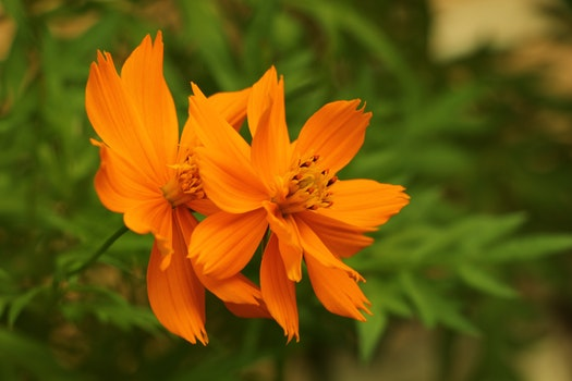 Close-Up Photography of Orange Flowers