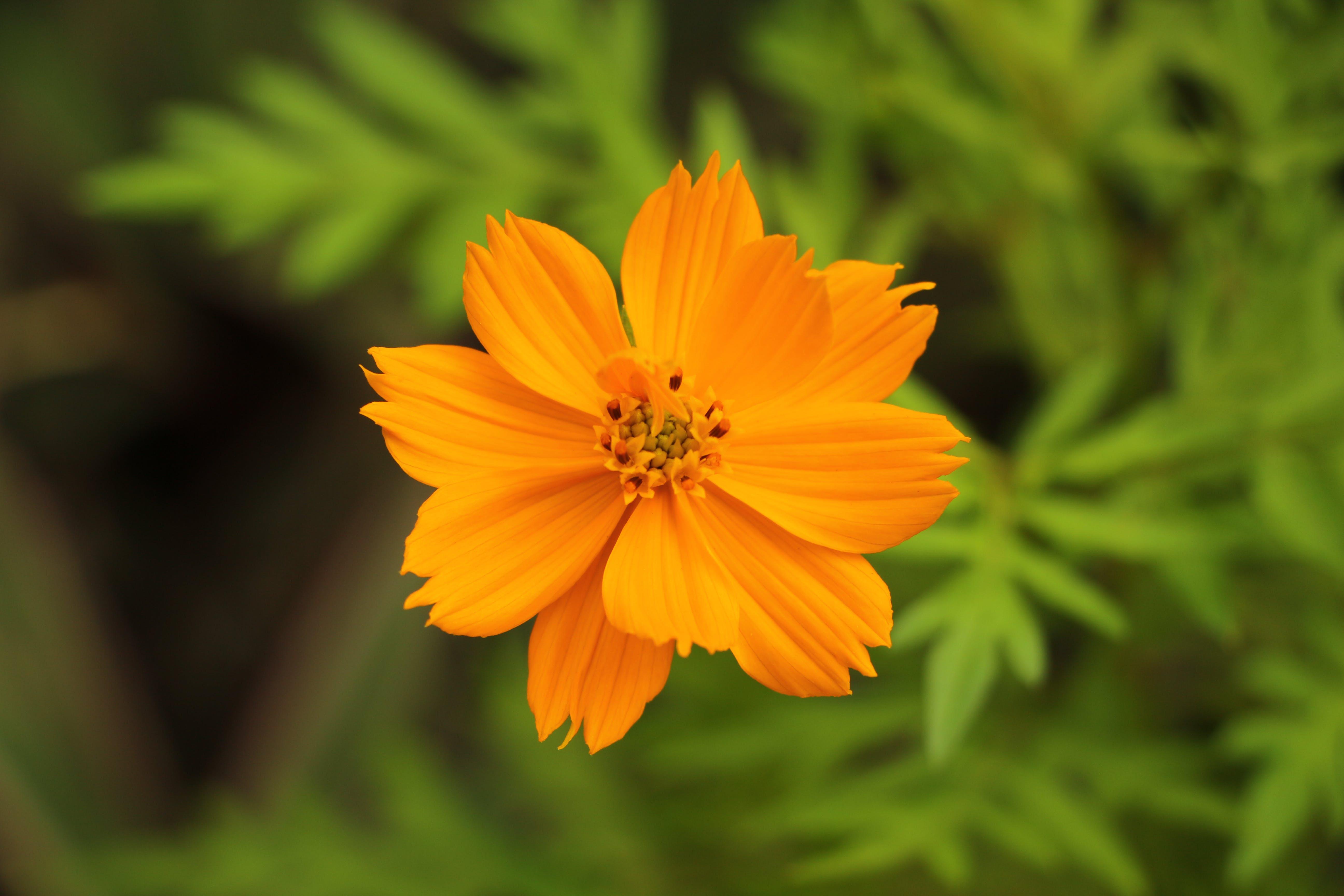 Бесплатное стоковое фото с ботанический, глубина резкости, желтый, завод