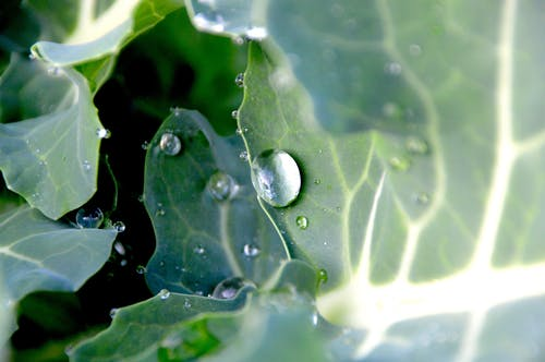 Macro Photography of Water Drops on Leaves