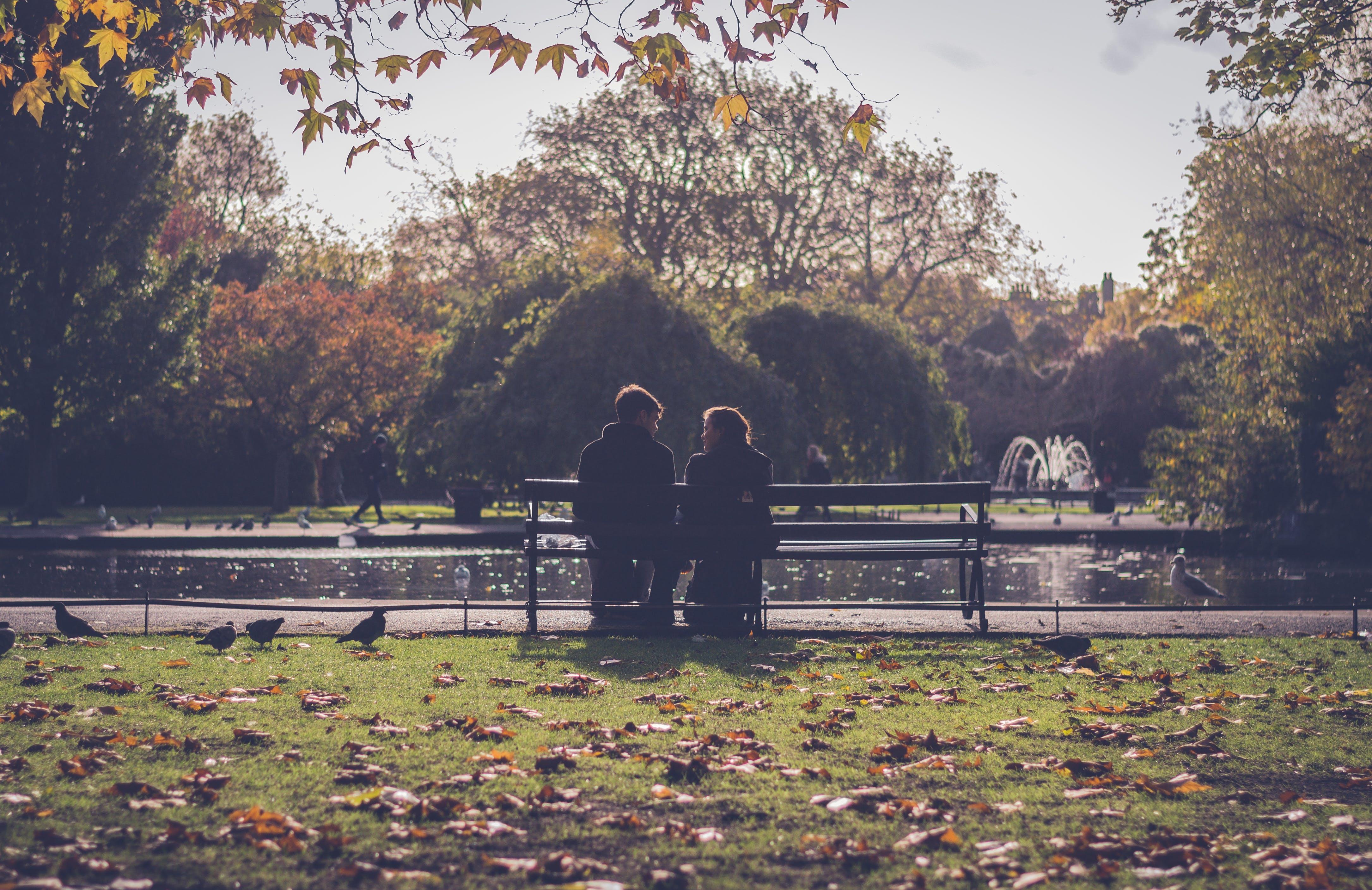 ağaçlar, akçaağaç yaprakları, Aşk, aşkını ispatla içeren Ücretsiz stok fotoğraf