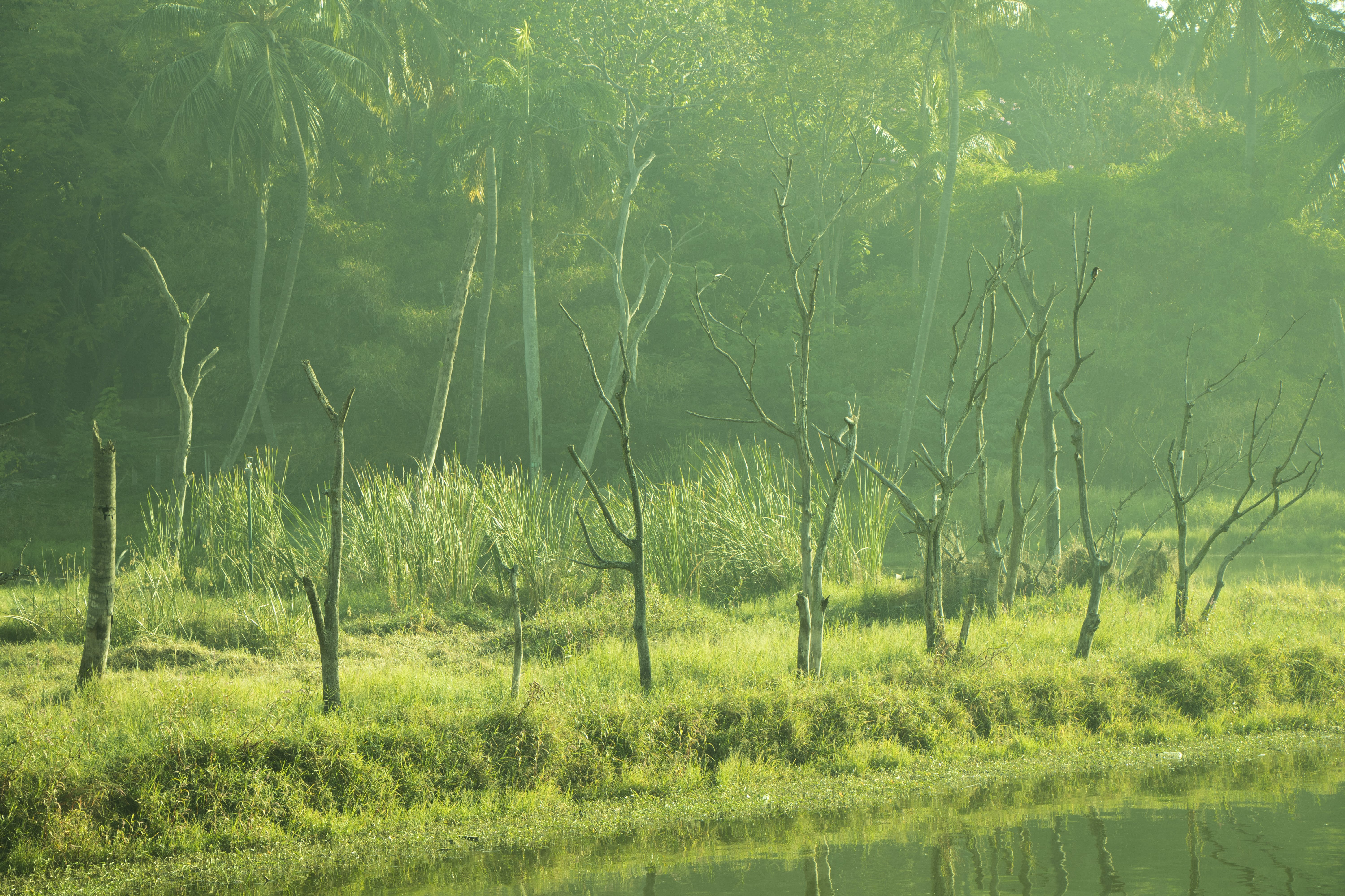 Free stock photo of calm waters, dead trees, greenery, greentrees