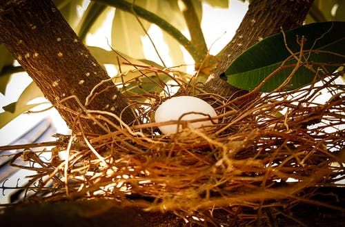 Free stock photo of bird nest, egg