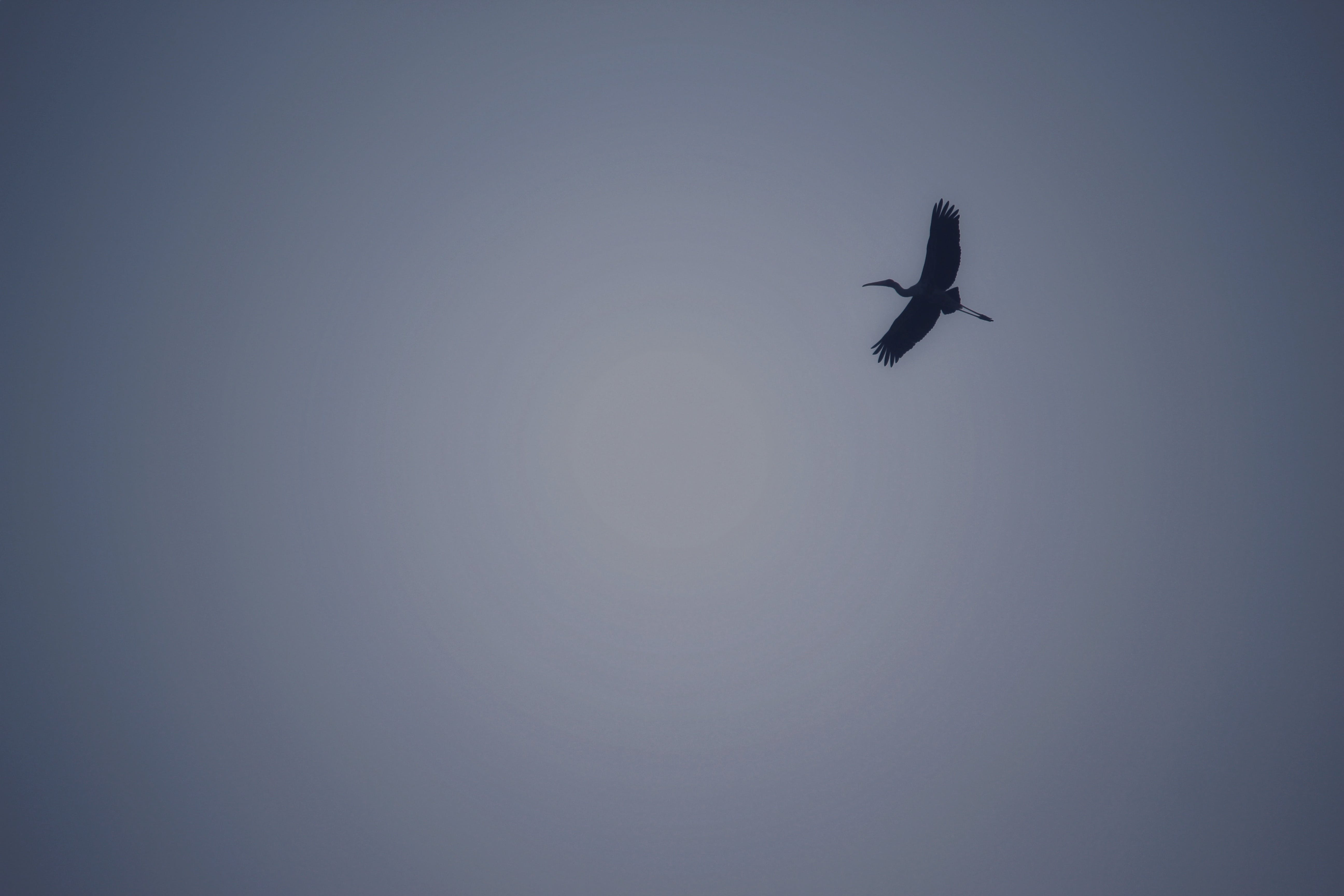 Kostnadsfri bild av bakgrundsbelyst, dagsljus, djur, flygande