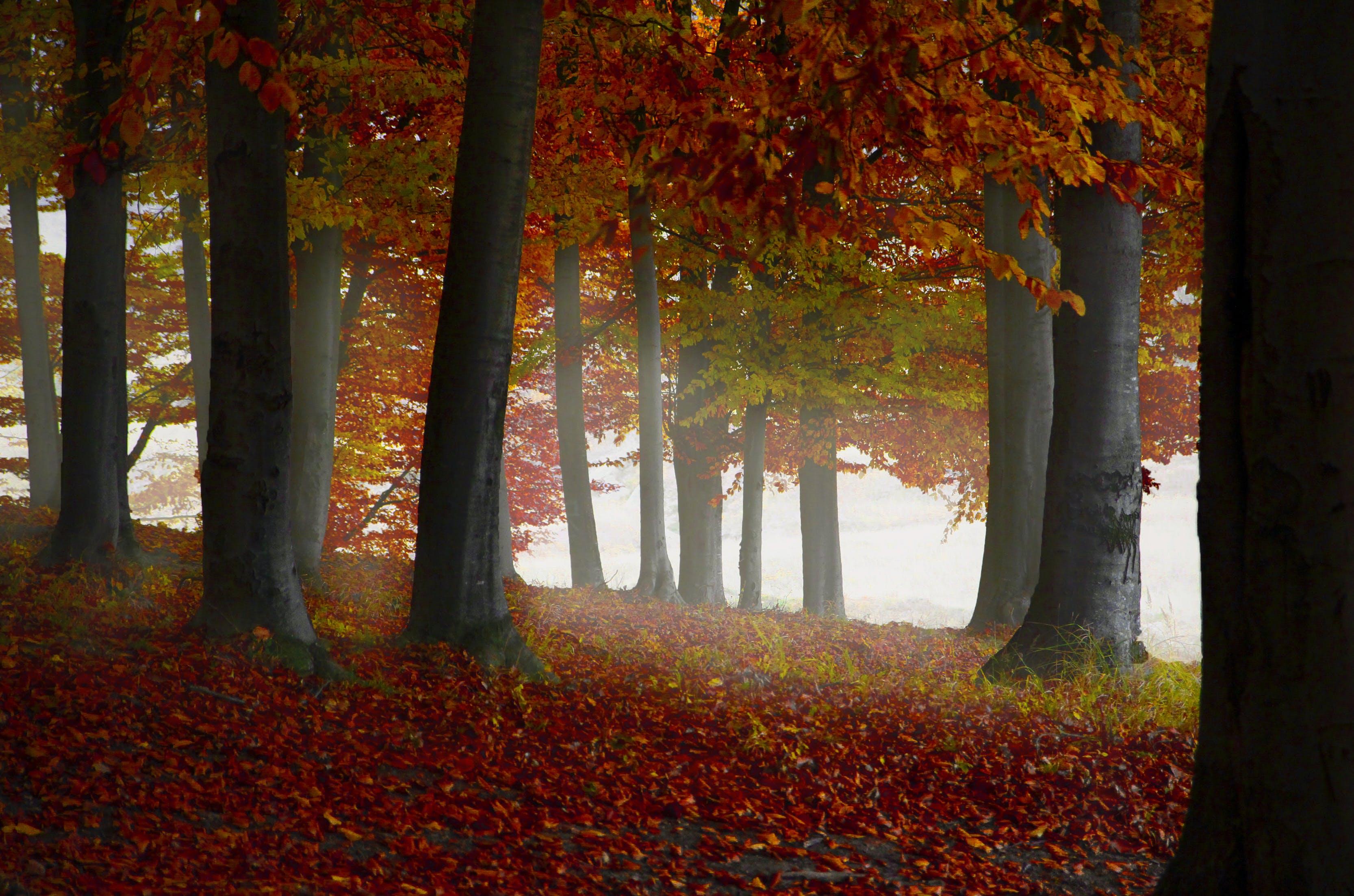 Brown Leaf Trees
