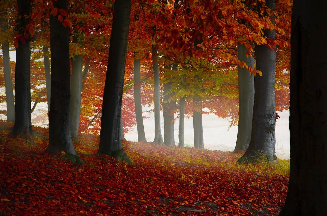 계절, 공원, 나무