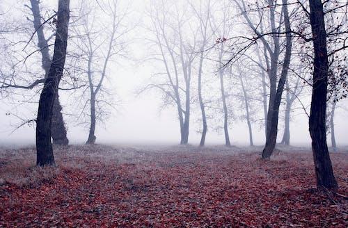 Photos gratuites de arbres, branches, brouillard, brume