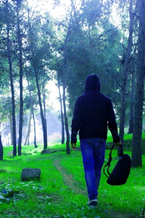 Kostnadsfri bild av djungel, fokus, fotografering, fritid