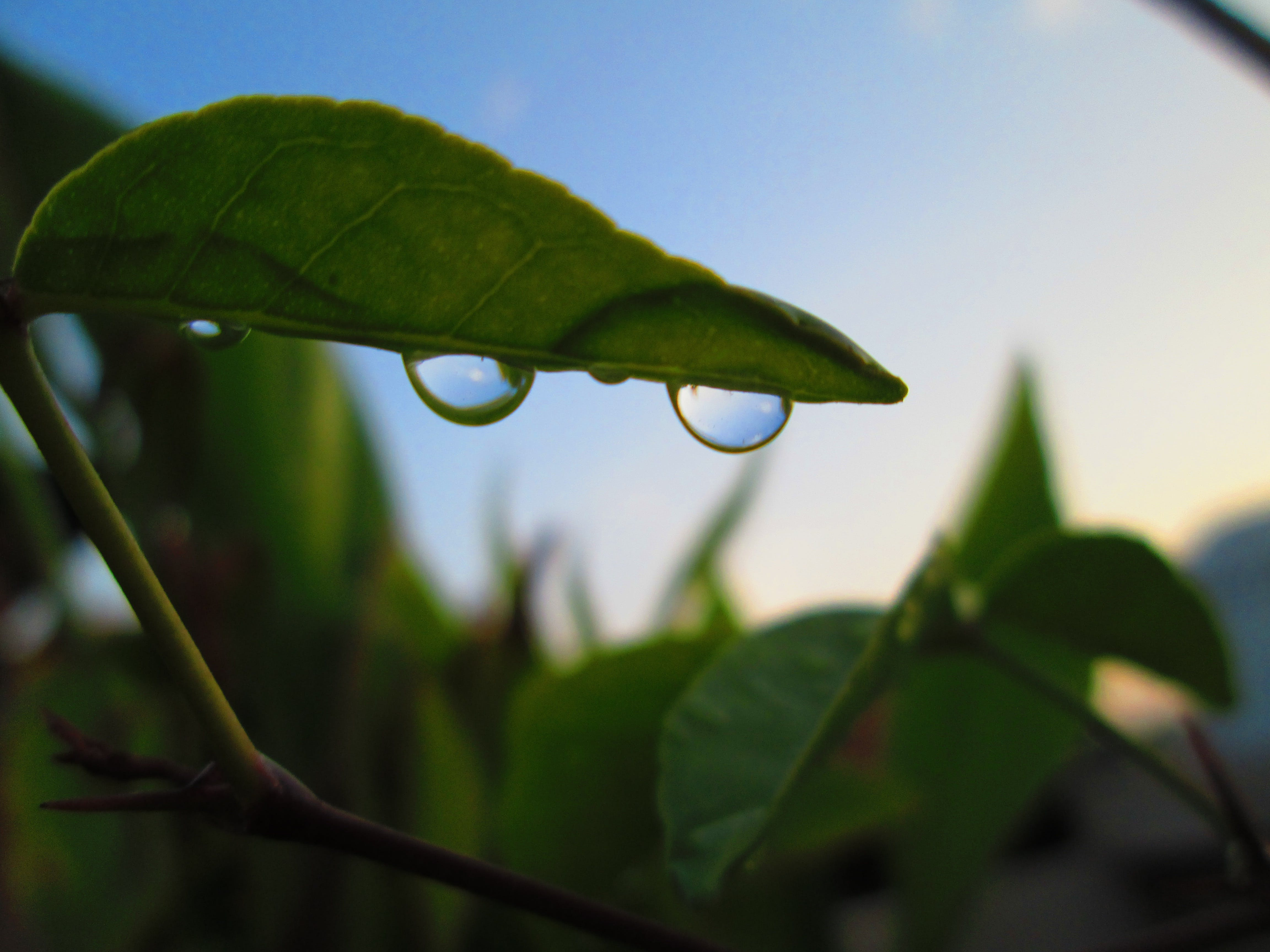 Free stock photo of green, water droplet