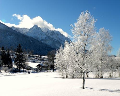 Kostenloses Stock Foto zu berge, frost, schnee