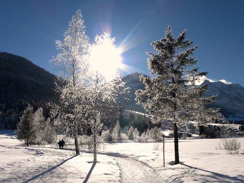 Kostenloses Stock Foto zu berge, schnee, winter