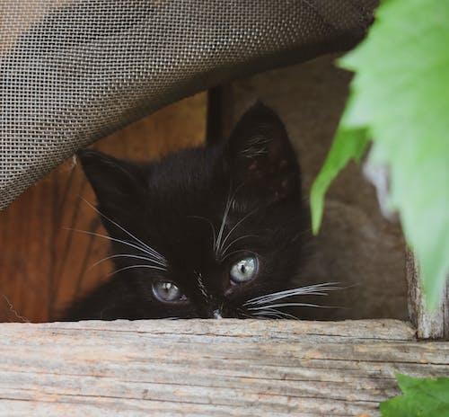 Δωρεάν στοκ φωτογραφιών με Γάτα, γατάκι, γατούλα