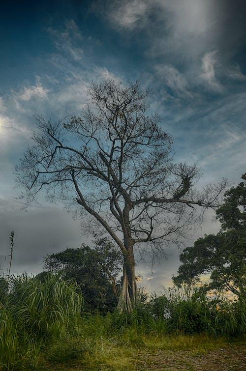 ağaçlar, bulutlar, çim, çimen içeren Ücretsiz stok fotoğraf