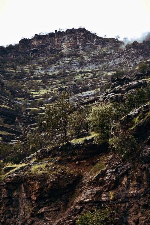Gratis stockfoto met berg, bergwandelen, bomen, canyon
